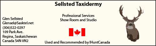 Sellsted Taxidermy Regina hunt canada stuffed great results contact glen